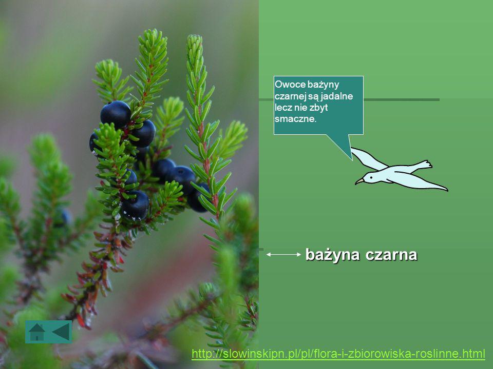 Roślinność Obszar Słowińskiego Parku Narodowego cechuje wyjątkowo duża różnorodność siedlisk co, w połączeniu ze skomplikowanym układem stosunków wodn