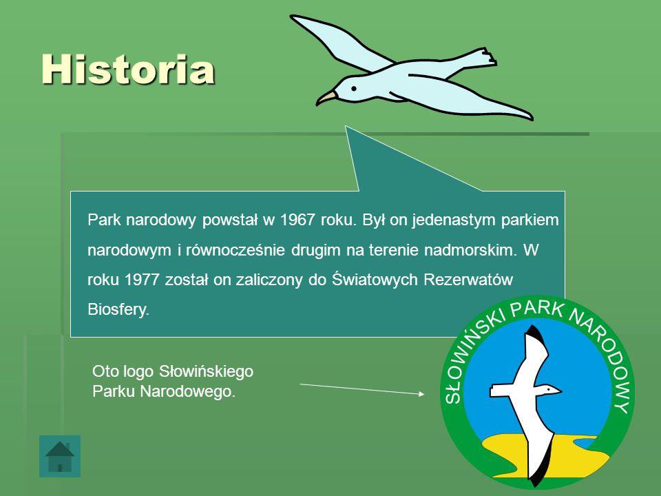 Słowiński Park Narodowy -historia -wydmy -owady -płazy i gady -płazy i gady -ptaki -zwierzęta -roślinność -rzeki i jeziora -rzeki i jeziora -położenie