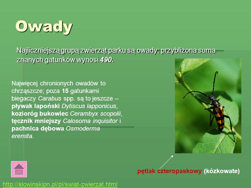 Wydmy Wydmy Wydmy stanowią ważną część Słowińskiego Parku Narodowego. Turyści chętnie je oglądają.WYDMY Wydmy są to wielkie góry piasku. Tworzone są p