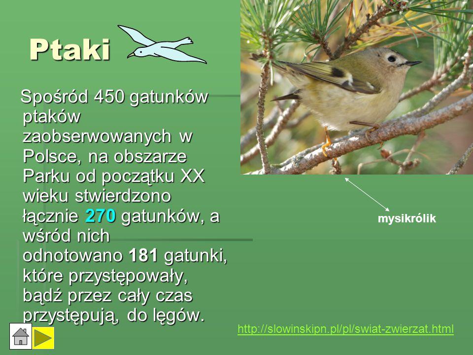 Płazy i gady Fauna lądowych kręgowców zmiennocieplnych Słowińskiego Parku Narodowego reprezentowana jest przez 10 gatunków płazów i 5 gatunków gadów (