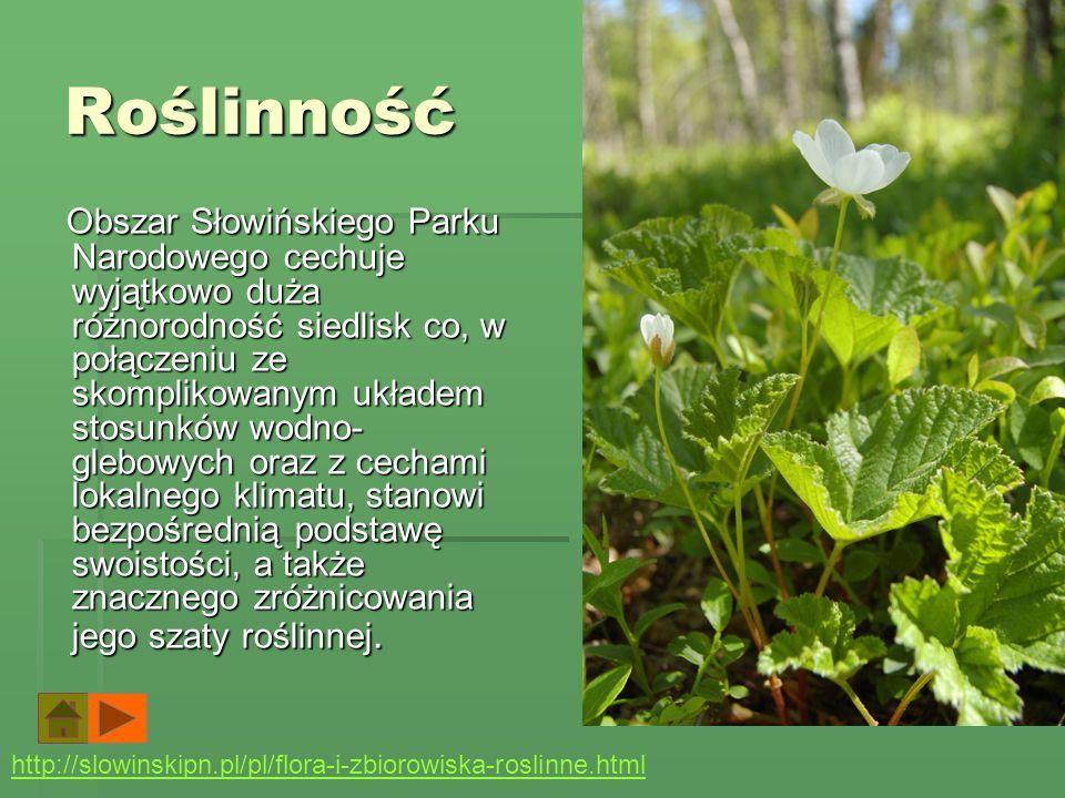 Zwierzęta Teriofauna Słowińskiego Parku Narodowego jest bogata - występuje tu około 60% spośród stwierdzonych w Polsce gatunków ssaków. Wśród najbardz