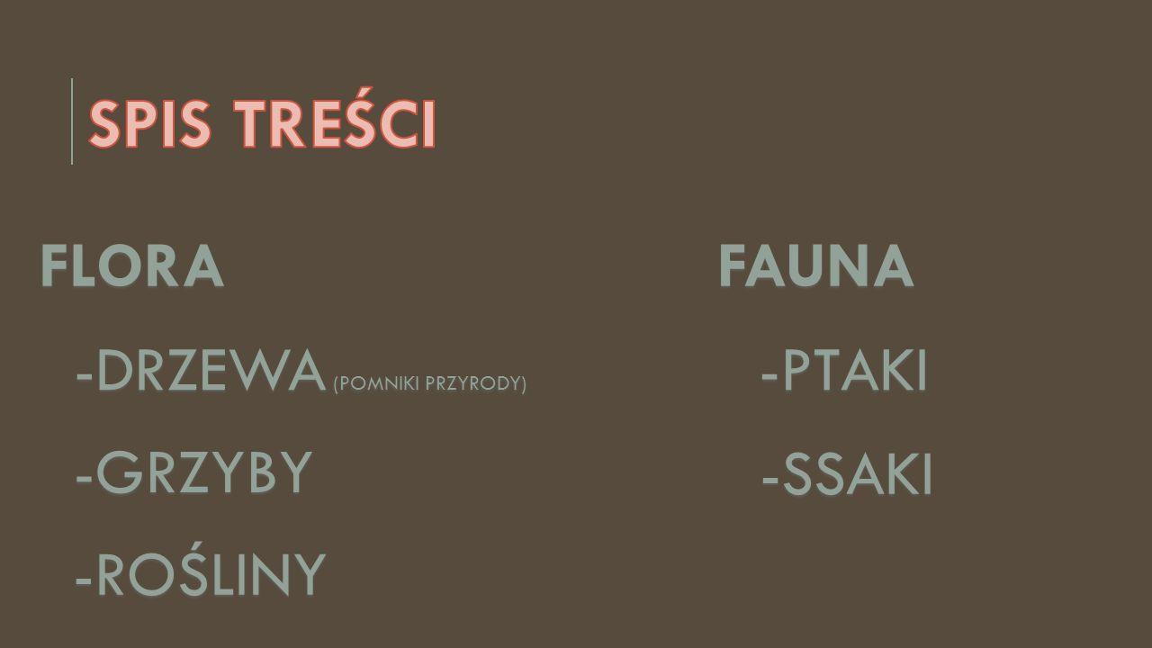 FLORAFAUNA -DRZEWA (POMNIKI PRZYRODY) -DRZEWA (POMNIKI PRZYRODY) -GRZYBY -ROŚLINY -PTAKI -SSAKI