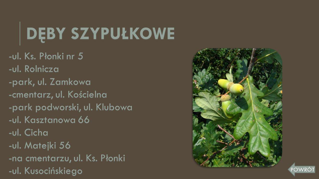-ul. Ks. Płonki nr 5 -ul. Rolnicza -park, ul. Zamkowa -cmentarz, ul. Kościelna -park podworski, ul. Klubowa -ul. Kasztanowa 66 -ul. Cicha -ul. Matejki