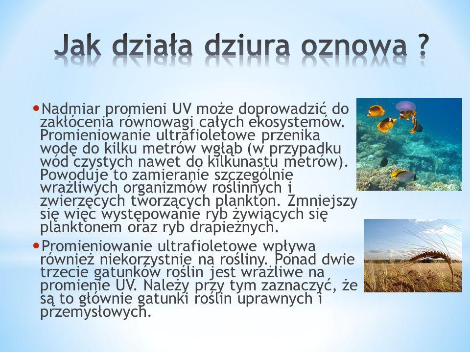 Nadmiar promieni UV może doprowadzić do zakłócenia równowagi całych ekosystemów. Promieniowanie ultrafioletowe przenika wodę do kilku metrów wgłąb (w