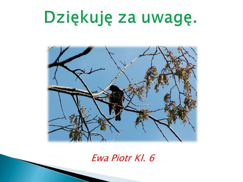 Ewa Piotr Kl. 6