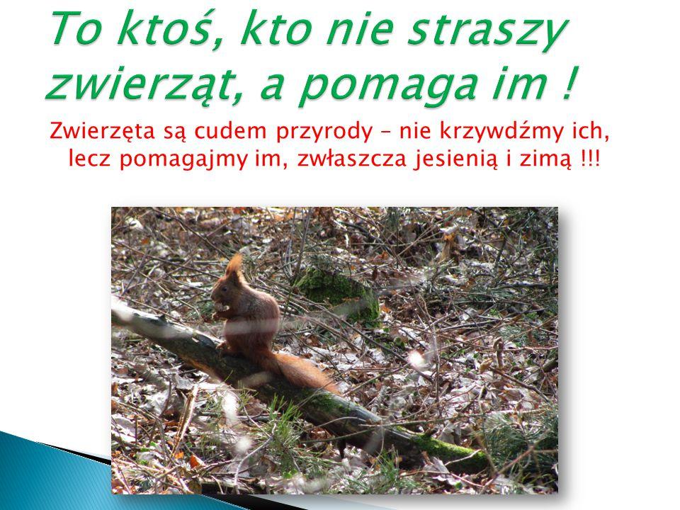 Zwierzęta są cudem przyrody – nie krzywdźmy ich, lecz pomagajmy im, zwłaszcza jesienią i zimą !!!