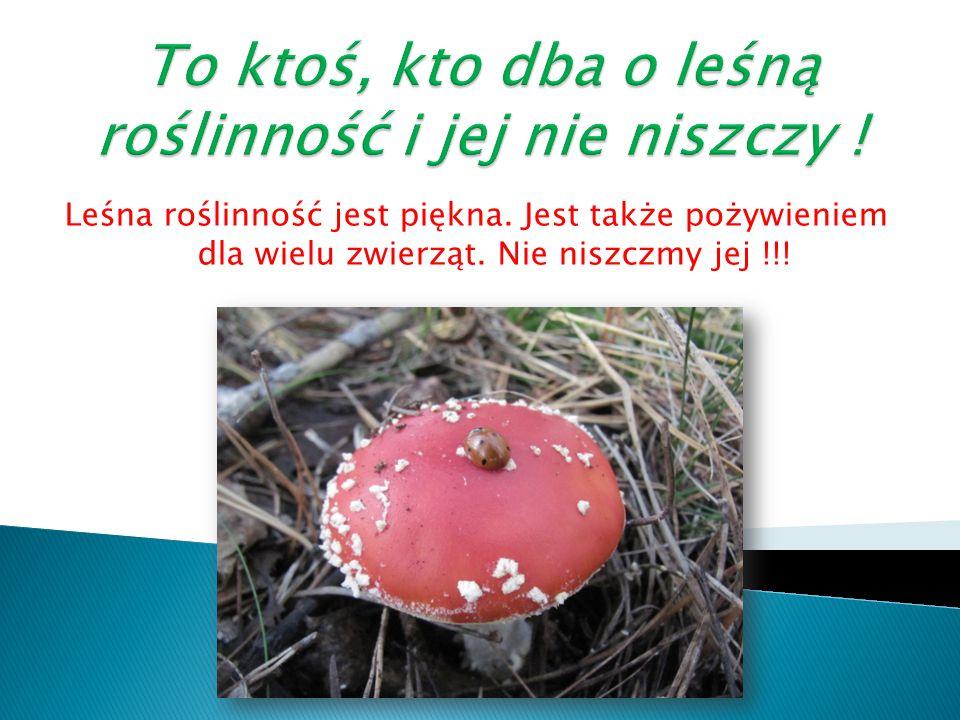 Leśna roślinność jest piękna. Jest także pożywieniem dla wielu zwierząt. Nie niszczmy jej !!!