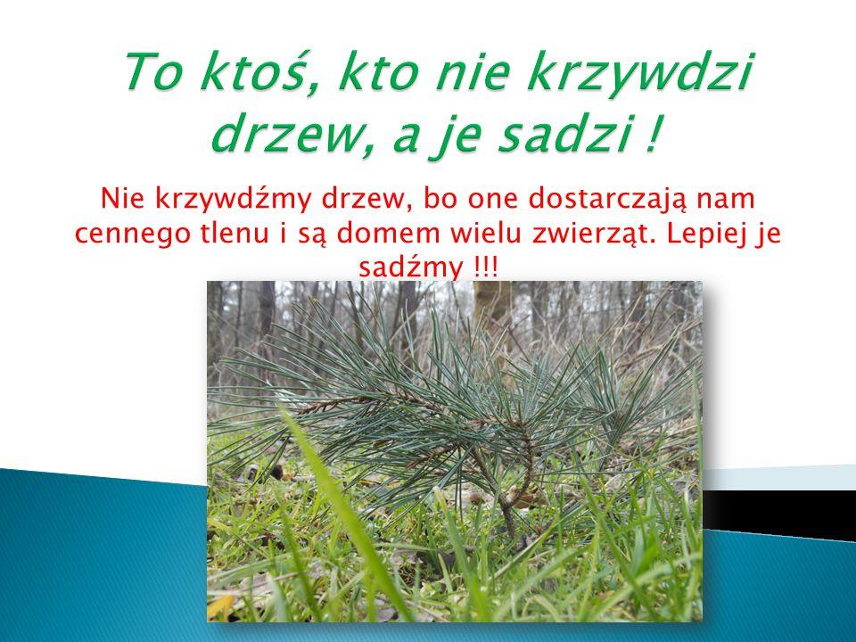 Nie krzywdźmy drzew, bo one dostarczają nam cennego tlenu i są domem wielu zwierząt. Lepiej je sadźmy !!!