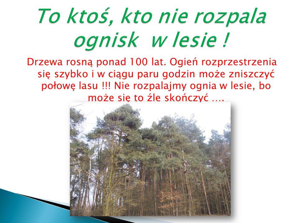 … dba o las i nie pozwoli by spłonął, kocha zwierzęta leśne i zawsze będzie go chronił, lubi oglądać piękną leśną roślinność, czyli kocha las i nie da go skrzywdzić !!.