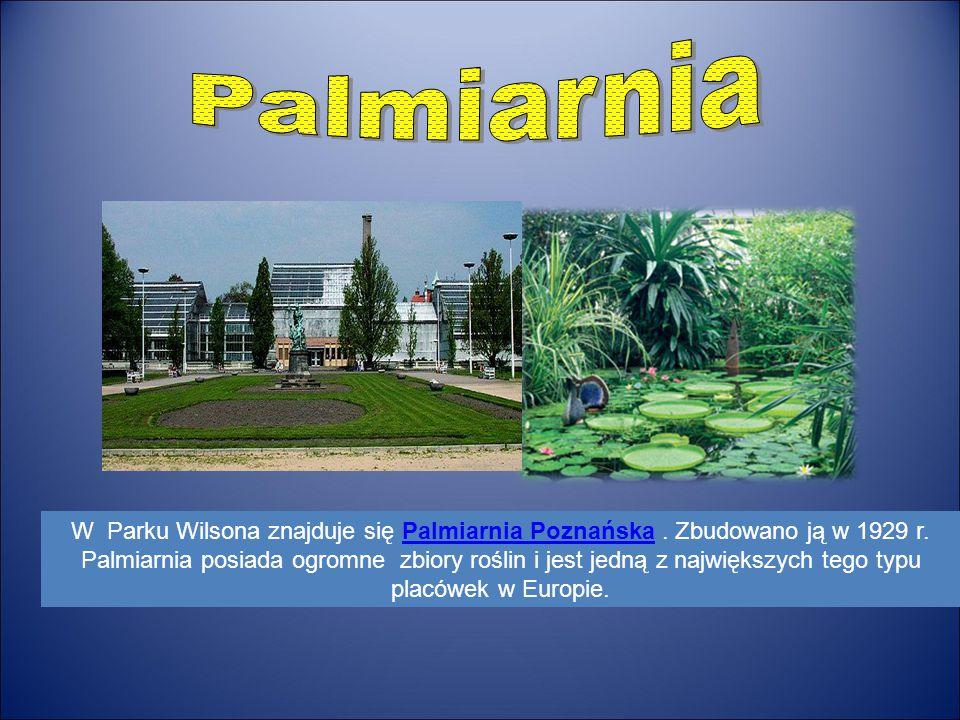 W Parku Wilsona znajduje się Palmiarnia Poznańska. Zbudowano ją w 1929 r. Palmiarnia posiada ogromne zbiory roślin i jest jedną z największych tego ty