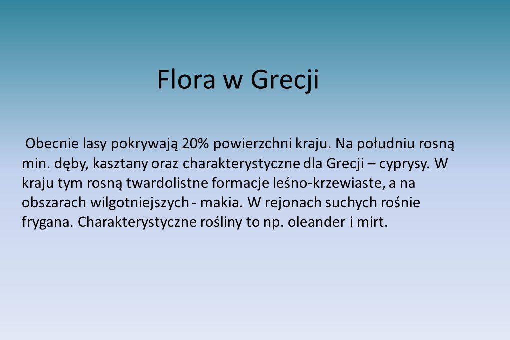 Flora w Grecji Obecnie lasy pokrywają 20% powierzchni kraju. Na południu rosną min. dęby, kasztany oraz charakterystyczne dla Grecji – cyprysy. W kraj