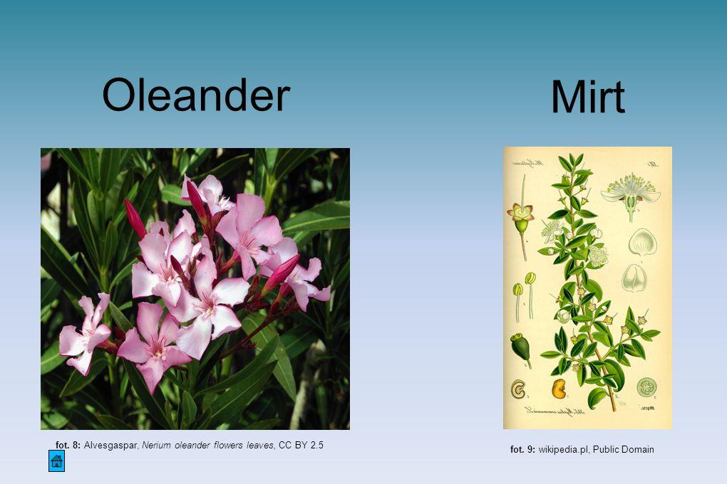 Oleander fot. 8: Alvesgaspar, Nerium oleander flowers leaves, CC BY 2.5 Mirt fot. 9: wikipedia.pl, Public Domain