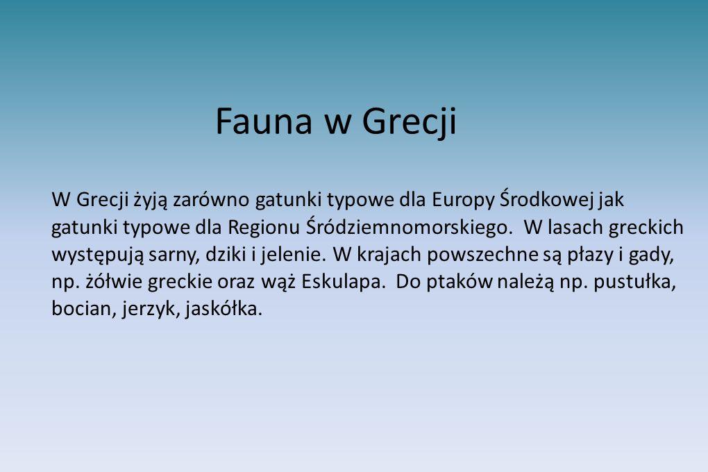 Fauna w Grecji W Grecji żyją zarówno gatunki typowe dla Europy Środkowej jak gatunki typowe dla Regionu Śródziemnomorskiego. W lasach greckich występu