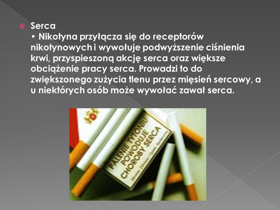  Serca Nikotyna przyłącza się do receptorów nikotynowych i wywołuje podwyższenie ciśnienia krwi, przyspieszoną akcję serca oraz większe obciążenie pr