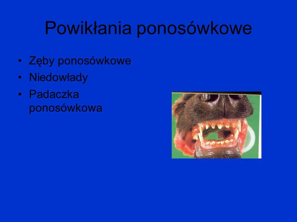 Powikłania ponosówkowe Zęby ponosówkowe Niedowłady Padaczka ponosówkowa