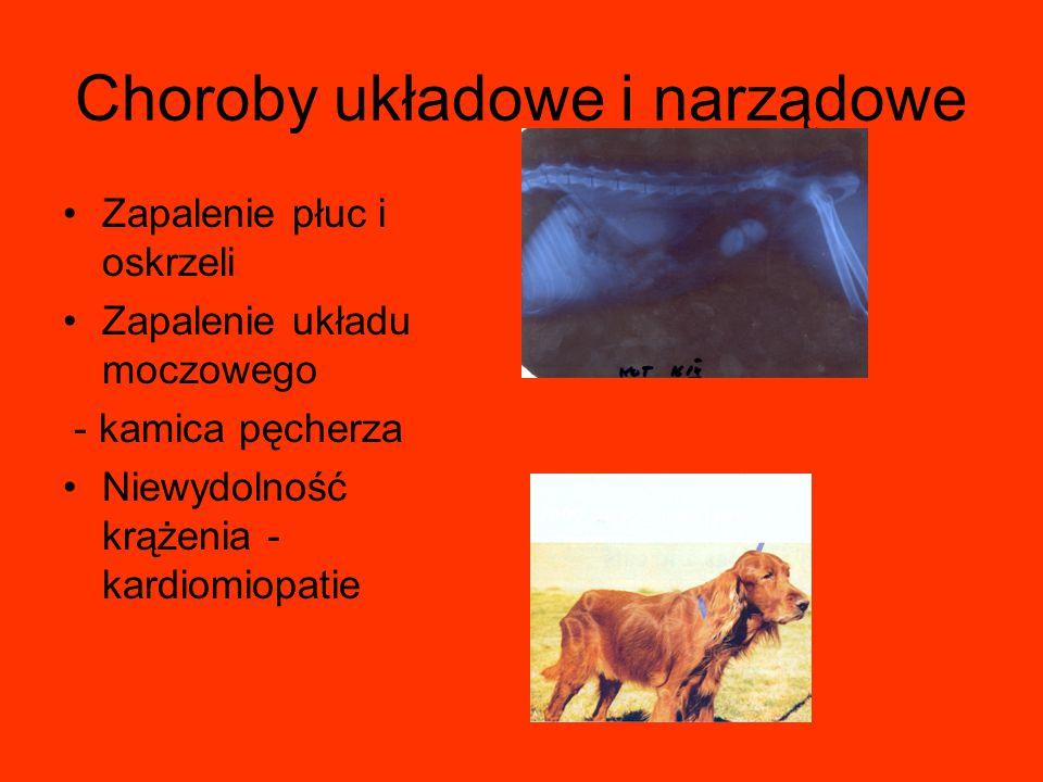 Choroby układowe i narządowe Zapalenie płuc i oskrzeli Zapalenie układu moczowego - kamica pęcherza Niewydolność krążenia - kardiomiopatie