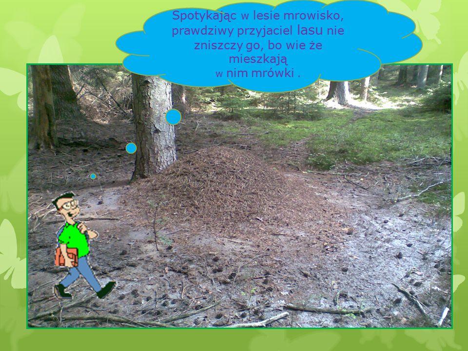 Spotykając w lesie mrowisko, prawdziwy przyjaciel lasu nie zniszczy go, bo wie że mieszkają w nim mrówki.