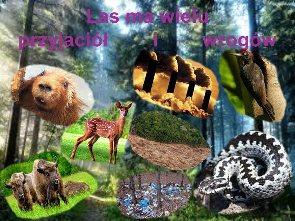 Obrońcy lasu Najmniejsi i najliczniejsi mieszkańcy lasu owady, chronią las przed szkodnikami.