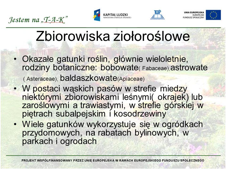 Zbiorowiska ziołoroślowe Okazałe gatunki roślin, głównie wieloletnie, rodziny botaniczne: bobowate ( Fabaceae), astrowate ( Asteraceae), baldaszkowate