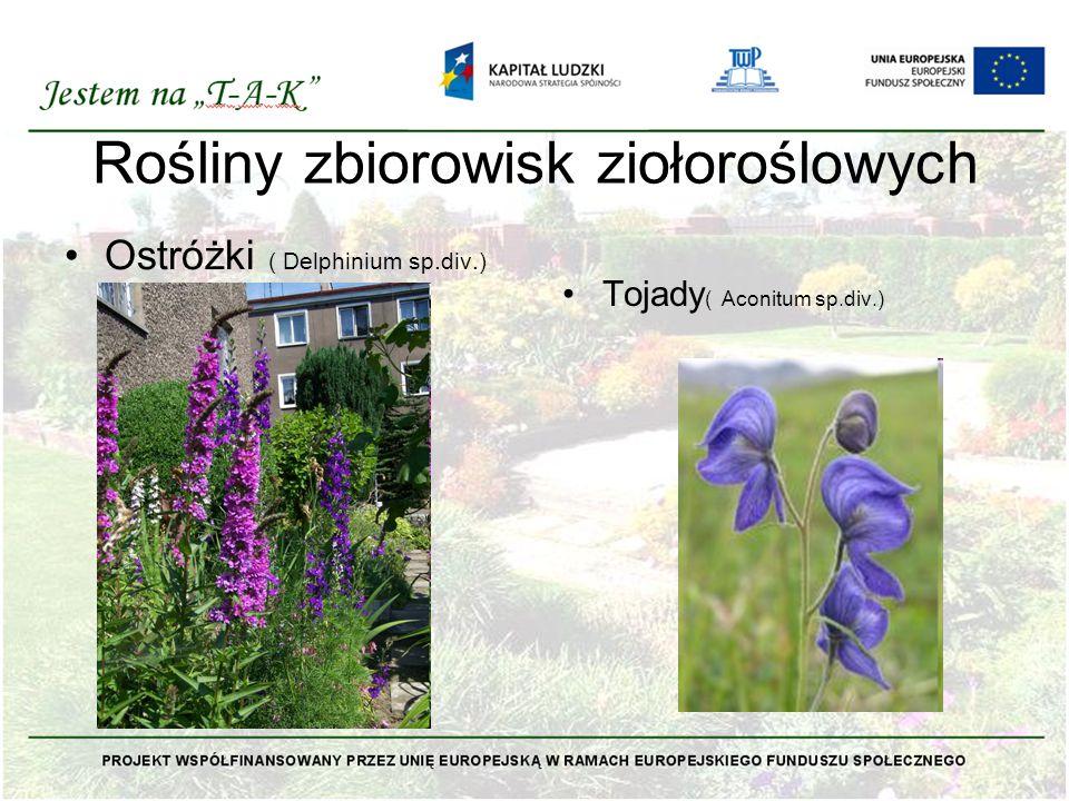 Rośliny zbiorowisk ziołoroślowych Ostróżki ( Delphinium sp.div.) Tojady ( Aconitum sp.div.)