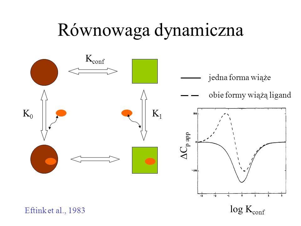 K conf K1K1 K0K0 Równowaga dynamiczna Eftink et al., 1983 log K conf  C p app jedna forma wiąże obie formy wiążą ligand