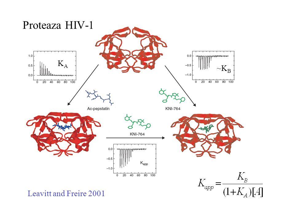 Leavitt and Freire 2001 KAKA ~K B Proteaza HIV-1
