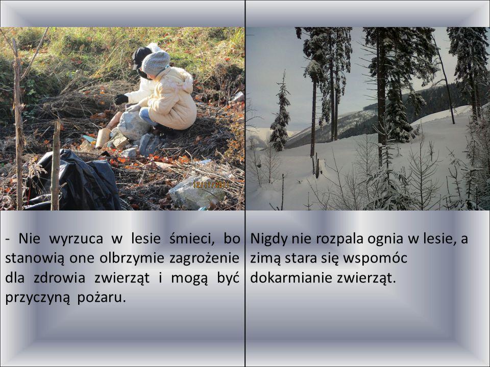 - Nie wyrzuca w lesie śmieci, bo stanowią one olbrzymie zagrożenie dla zdrowia zwierząt i mogą być przyczyną pożaru.