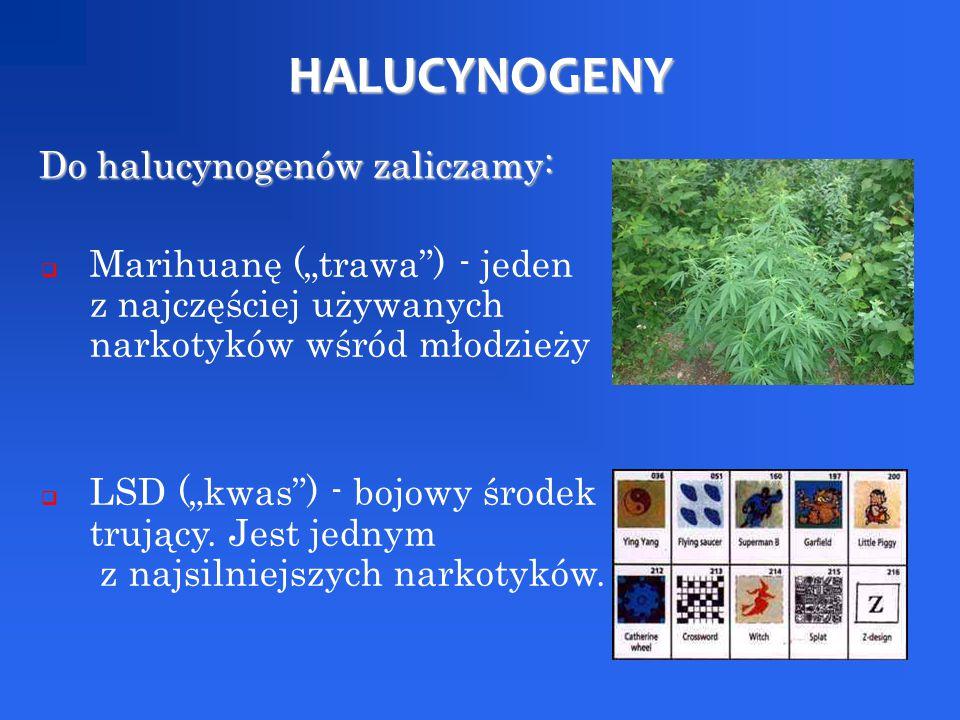 """HALUCYNOGENY Do halucynogenów zaliczamy: Do halucynogenów zaliczamy:  Marihuanę (""""trawa"""") - jeden z najczęściej używanych narkotyków wśród młodzieży"""