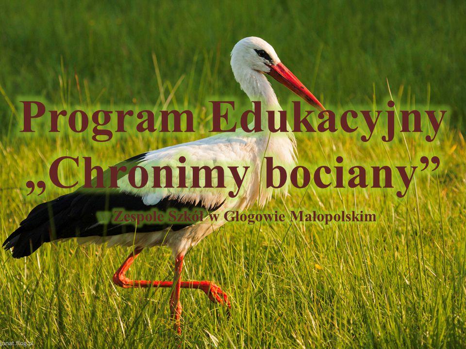 http://www.bociany.pl/ http://www.bocianyonline.pl/kamery.html http://www.bocian.org.pl/