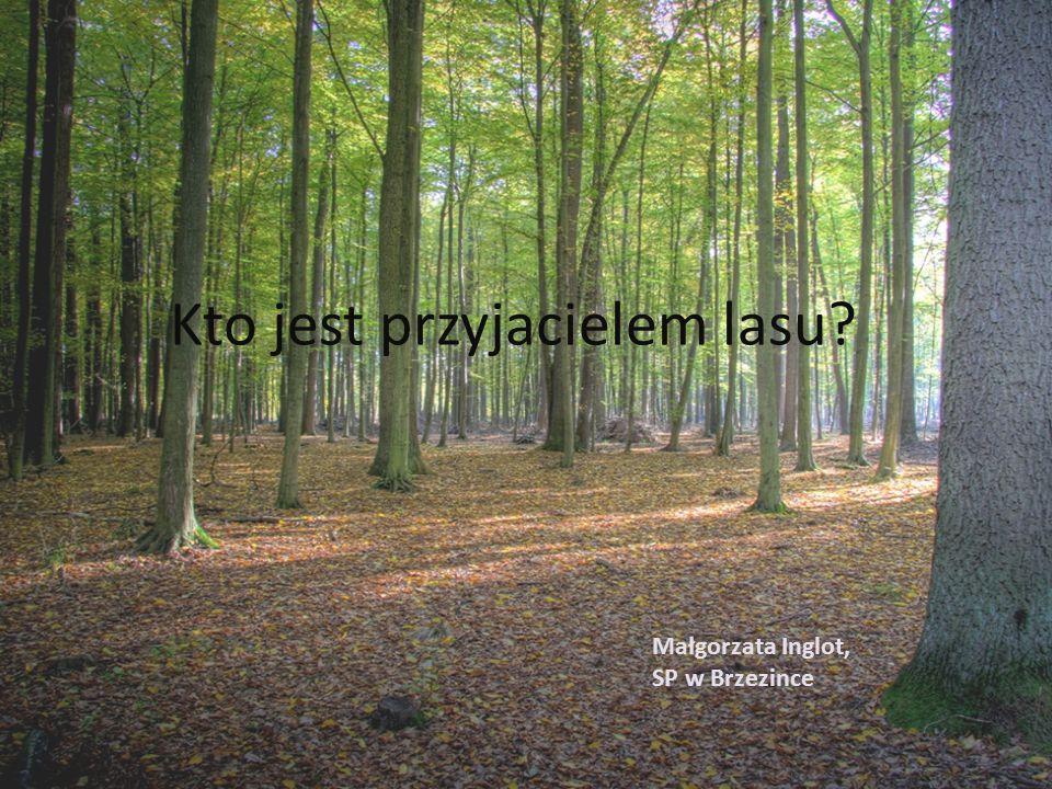 Kto jest przyjacielem lasu Małgorzata Inglot, SP w Brzezince