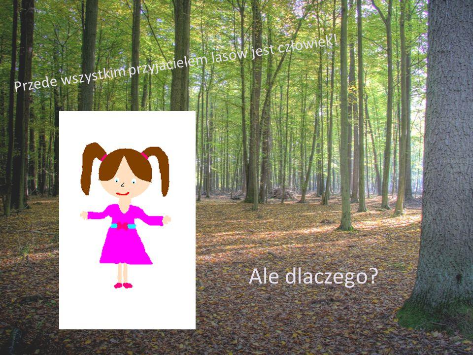 Człowiek: Wycina chore drzewa by zrobić miejsce dla zdrowych lub młodych.