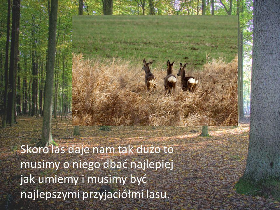 Skoro las daje nam tak dużo to musimy o niego dbać najlepiej jak umiemy i musimy być najlepszymi przyjaciółmi lasu.