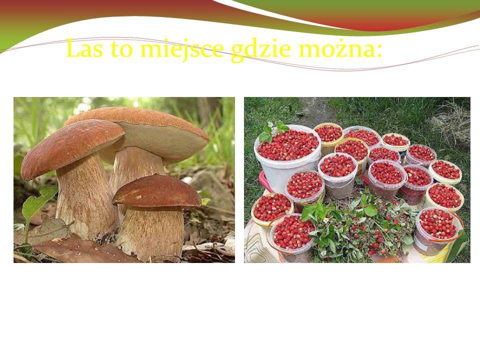 Las to miejsce gdzie można:  zbierać grzyby i owoce leśne