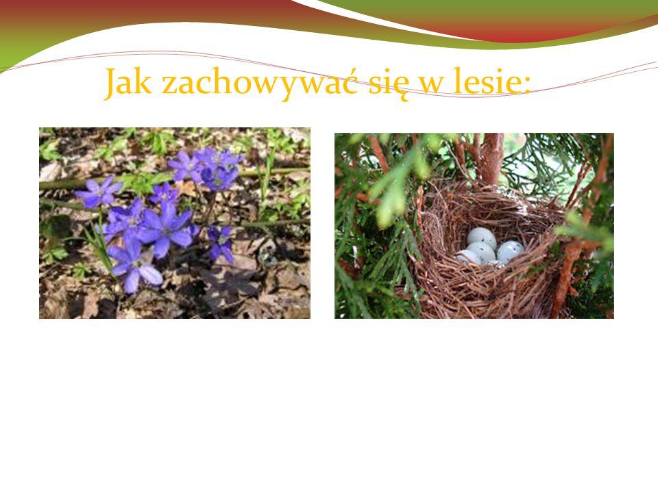 Jak zachowywać się w lesie:  nie niszczymy roślin,  nie zrywamy kwiatów,  nie wyciągamy ptasich jaj z gniazd