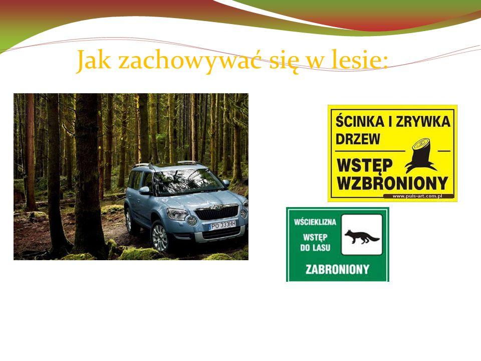 Jak zachowywać się w lesie:  nie wjeżdżamy autem do lasu,  czytamy leśne tablice - informujące o zagrożeniach