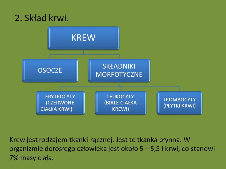 2. Skład krwi. KREW OSOCZE SKŁADNIKI MORFOTYCZNE ERYTROCYTY (CZERWONE CIAŁKA KRWI) LEUKOCYTY (BIAŁE CIAŁKA KREWI) TROMBOCYTY (PŁYTKI KRWI) Krew jest r