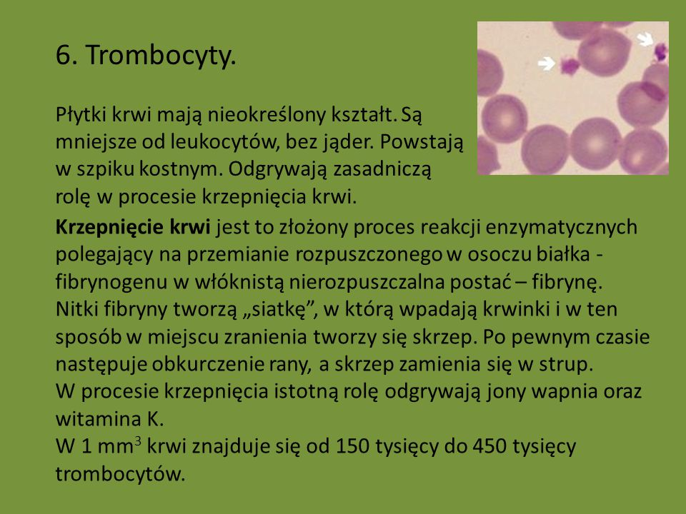 6. Trombocyty. Płytki krwi mają nieokreślony kształt. Są mniejsze od leukocytów, bez jąder. Powstają w szpiku kostnym. Odgrywają zasadniczą rolę w pro