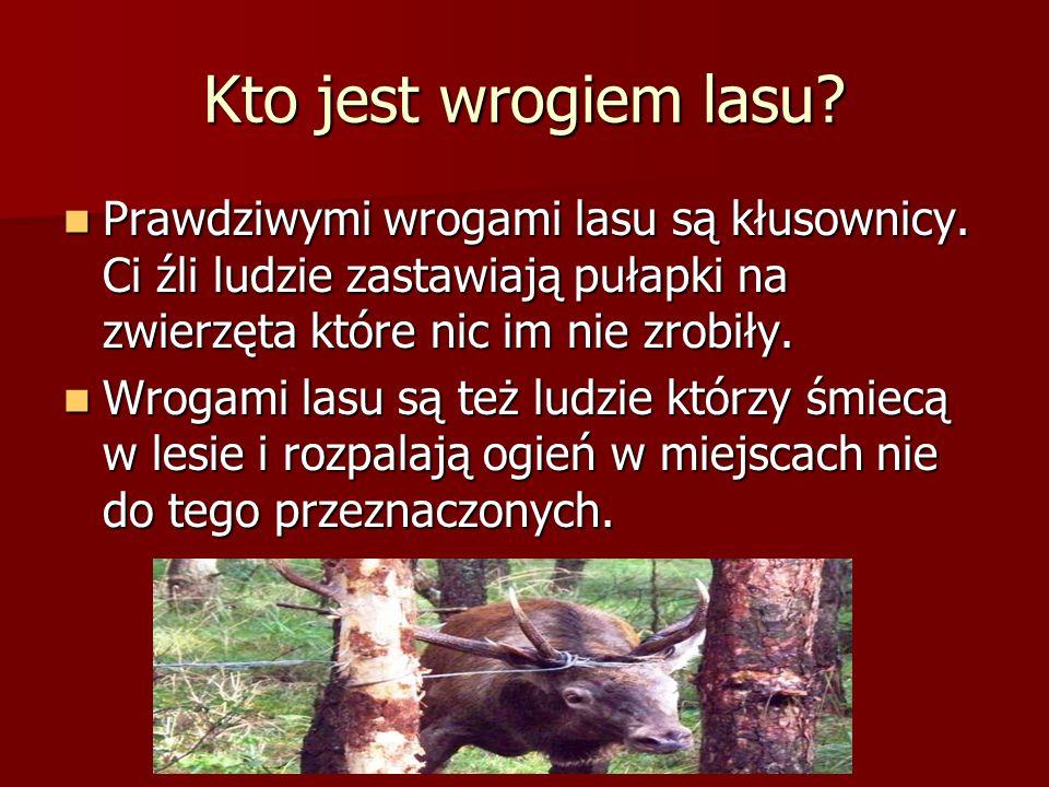 Kto jest wrogiem lasu? Prawdziwymi wrogami lasu są kłusownicy. Ci źli ludzie zastawiają pułapki na zwierzęta które nic im nie zrobiły. Prawdziwymi wro