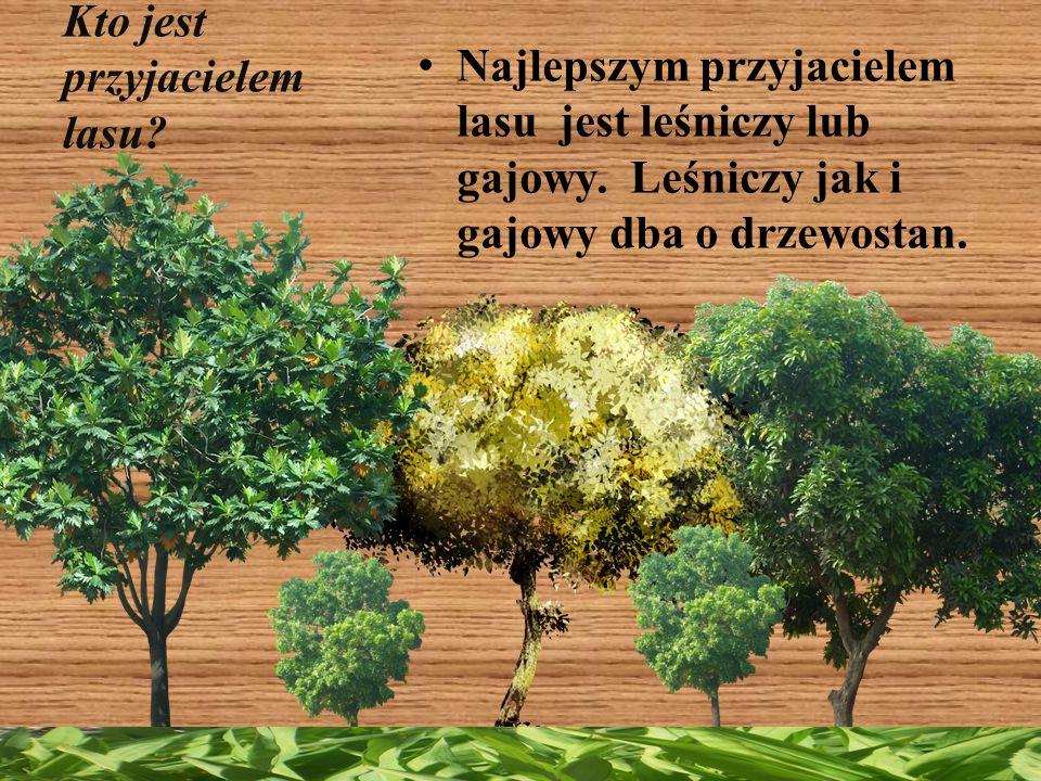 Kto jest przyjacielem lasu? Najlepszym przyjacielem lasu jest leśniczy lub gajowy. Leśniczy jak i gajowy dba o drzewostan.