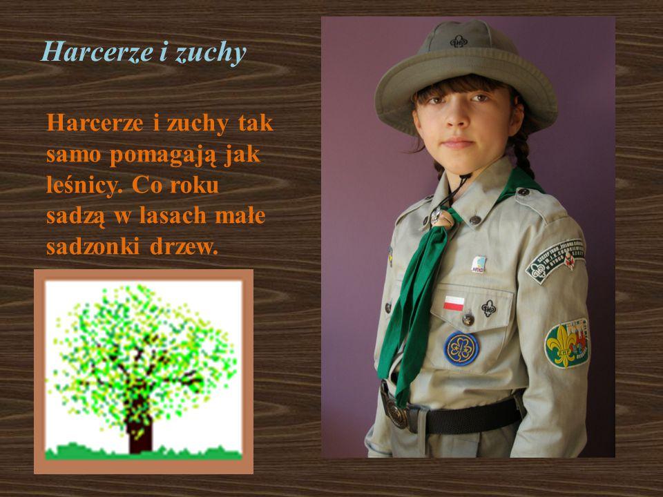 Harcerze i zuchy Harcerze i zuchy tak samo pomagają jak leśnicy. Co roku sadzą w lasach małe sadzonki drzew.