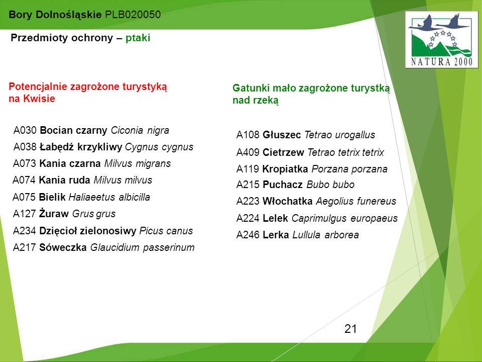 21 Bory Dolnośląskie PLB020050 A030 Bocian czarny Ciconia nigra A108 Głuszec Tetrao urogallus A075 Bielik Haliaeetus albicilla A038 Łabędź krzykliwy C