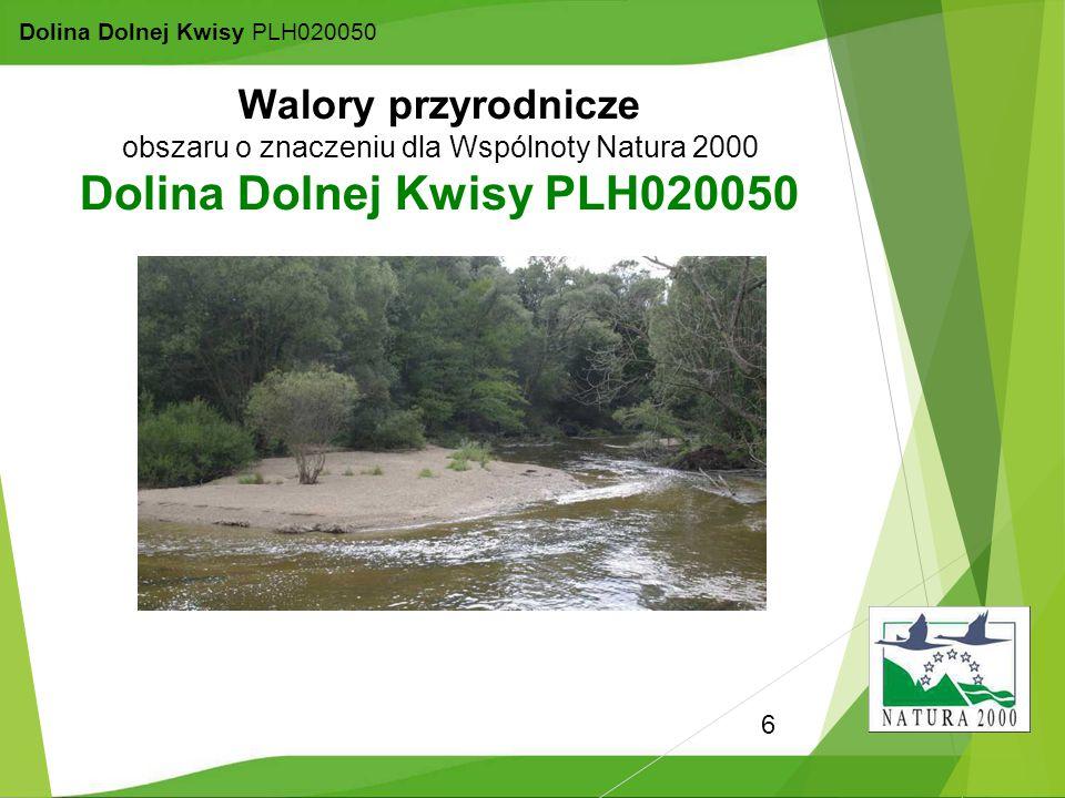 6 Dolina Dolnej Kwisy PLH020050 Walory przyrodnicze obszaru o znaczeniu dla Wspólnoty Natura 2000 Dolina Dolnej Kwisy PLH020050