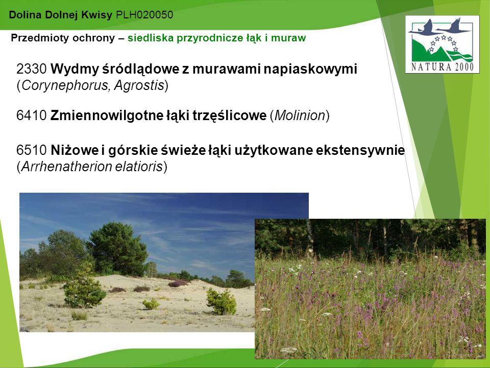 9 Dolina Dolnej Kwisy PLH020050 Przedmioty ochrony – siedliska przyrodnicze łąk i muraw 6510 Niżowe i górskie świeże łąki użytkowane ekstensywnie (Arr