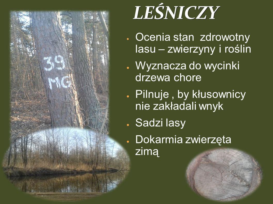 LEŚNICZY Ocenia stan zdrowotny lasu – zwierzyny i roślin ●W●Wyznacza do wycinki drzewa chore ●P●Pilnuje, by kłusownicy nie zakładali wnyk ●S●Sadzi lasy ●D●Dokarmia zwierzęta zimą