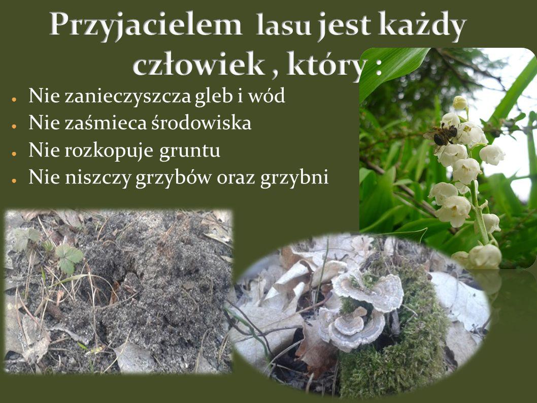 ● Nie zanieczyszcza gleb i wód ● Nie zaśmieca środowiska ● Nie rozkopuje gruntu ● Nie niszczy grzybów oraz grzybni