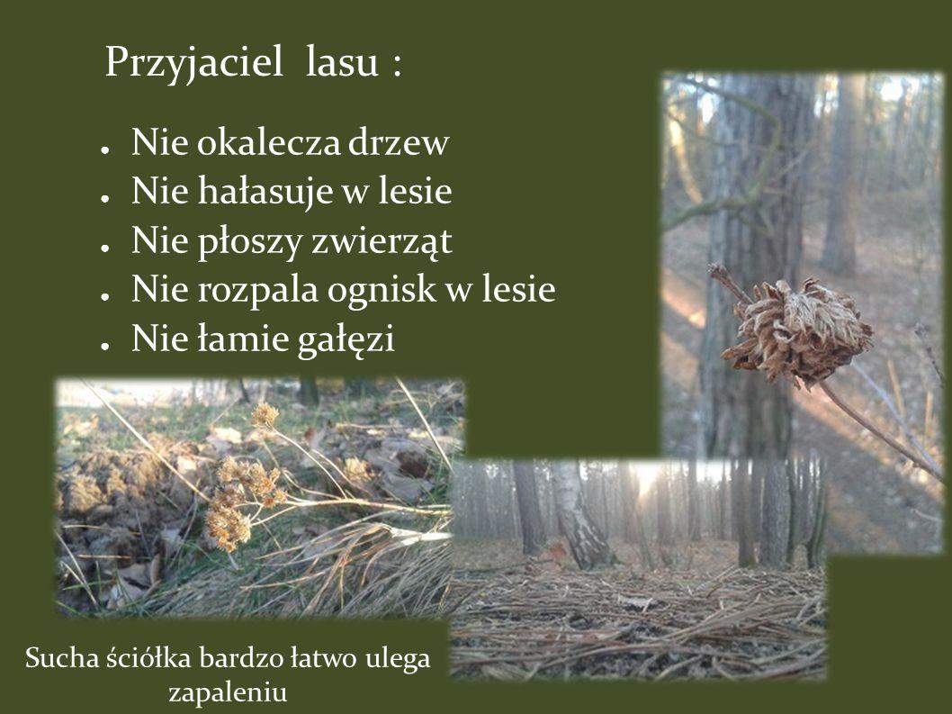 ● Nie okalecza drzew ● Nie hałasuje w lesie ● Nie płoszy zwierząt ● Nie rozpala ognisk w lesie ● Nie łamie gałęzi Sucha ściółka bardzo łatwo ulega zapaleniu Przyjaciel lasu :