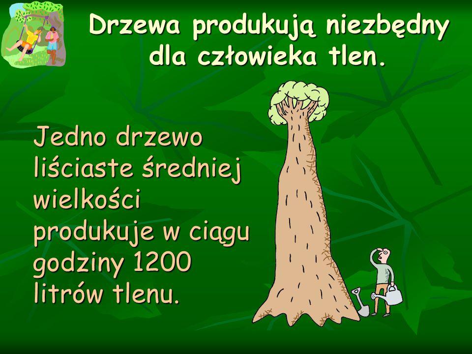 Drzewa produkują niezbędny dla człowieka tlen. Jedno drzewo liściaste średniej wielkości produkuje w ciągu godziny 1200 litrów tlenu.