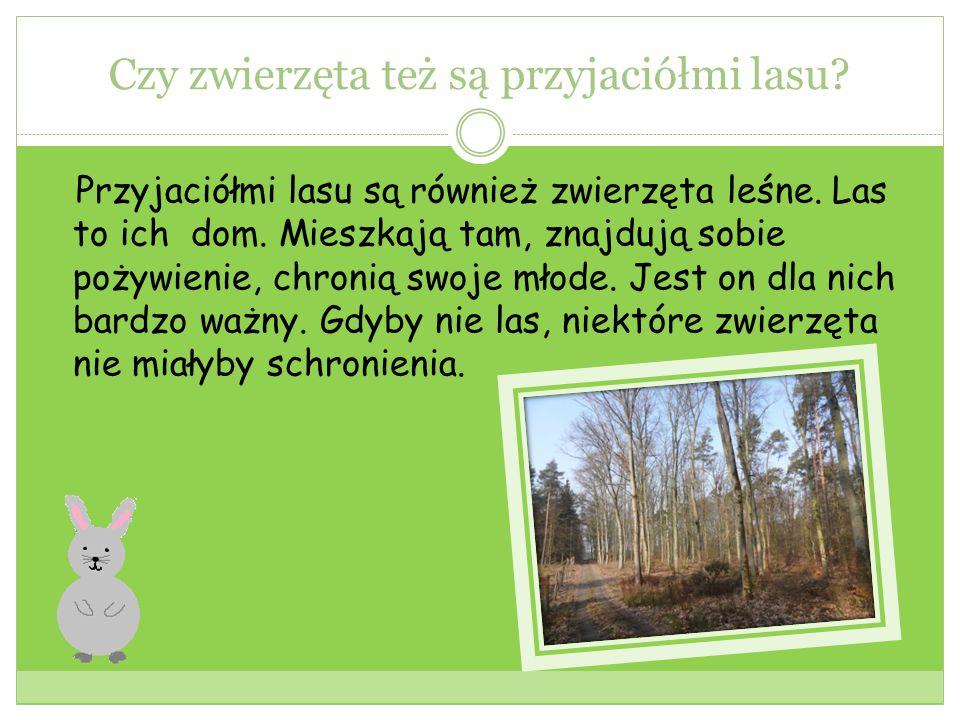 Leśniczy Przyjacielem lasu jest też leśniczy.Dba on o ten teren.