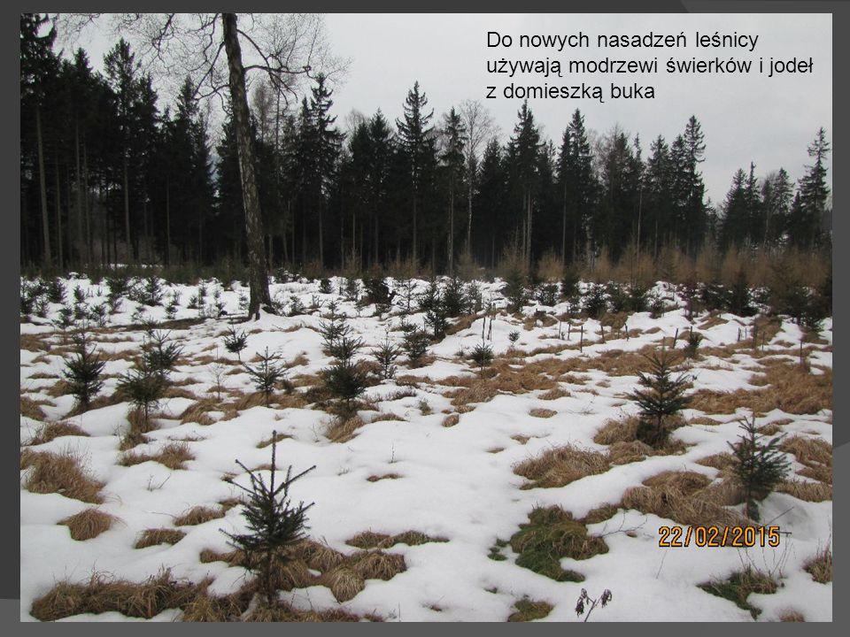 Wałbrzyskie lasy to ciekawe tereny rekreacyjne dla pieszych rowerzystów i narciarzy biegowych