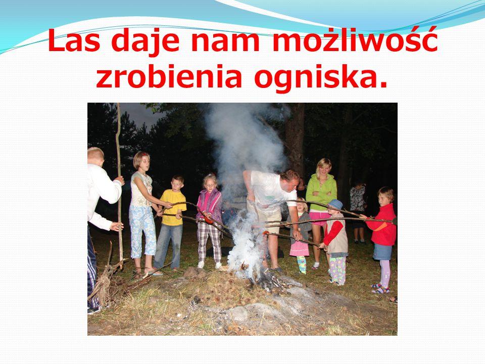 Las daje nam możliwość zrobienia ogniska.